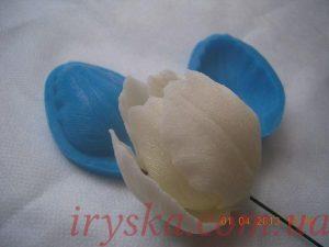Пелюсток тюльпану